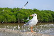 White seagull standing on the bridge in nature background. - 196510255