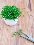 Weie Schüssel mit frischer Kresse und eine Schere auf einem braunen Holztisch. Ernte, Kräutermedizin, Textfreiraum. - 196514454