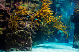 underwater coral reef landscape background in the blue sea - 196523646