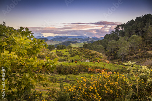Keuken foto achterwand Noord Europa Overlooking a pasture as the sun sets spectacularly over Cathedral Cove on the Coromandel Peninsula on the North Island of New Zealand near Auckland.