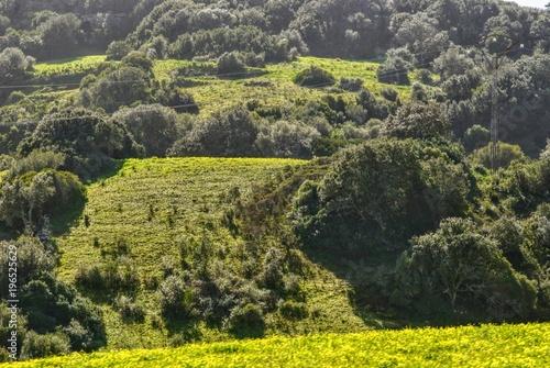 Foto op Canvas Grijs nature spring menorca balearic island spain