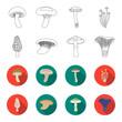 Morel, oyster, green amanita, actarius indigo.Mushroom set collection icons in outline,flet style vector symbol stock illustration web.