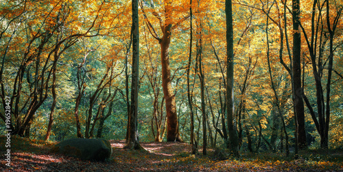 Хвойный лес на Кавказе, Краснодарский край, Россия