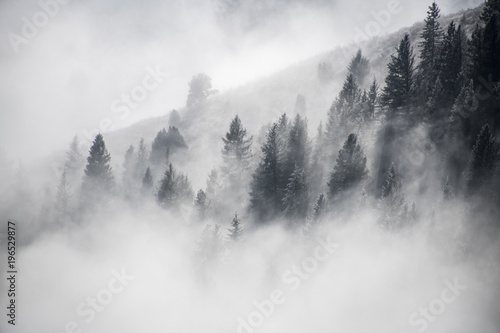 Dancing Fog Colorado - 196529877