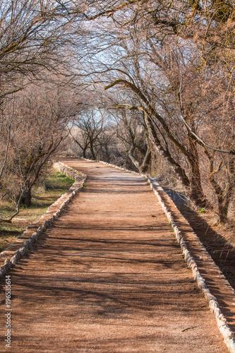 Plexiglas Weg in bos Caminos en la Naturaleza