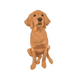 Golden Retriever cute puppy sitting. Yellow dog isolated on white background. Purebred canine for your design. - 196541638