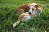 Dog and cat lie together - 196545832