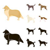 Collie, labrador, boxer, poodle. Dog breeds set collection icons in cartoon,black style vector symbol stock illustration web.