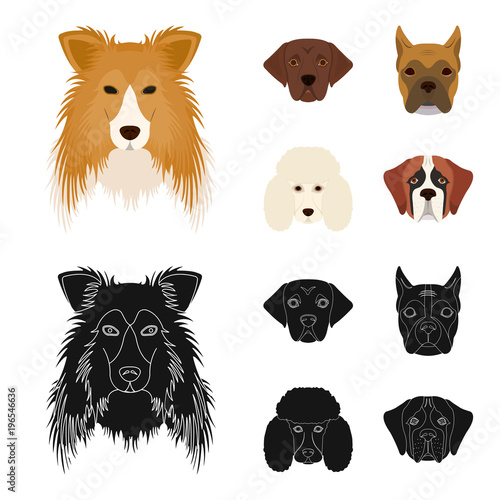 Muzzle of different breeds of dogs.Collie breed dog, lobladore, poodle, boxer set collection icons in cartoon,black style vector symbol stock illustration web. - 196546636