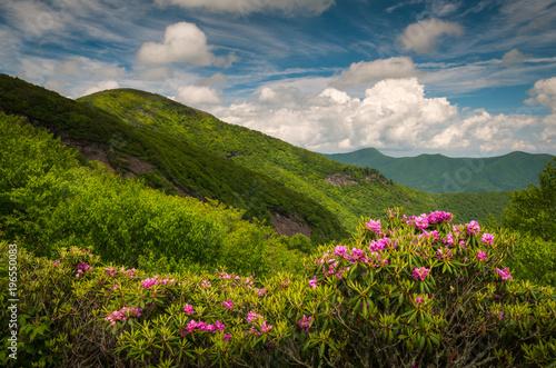 Asheville North Carolina Blue Ridge Parkway Spring Flowers Scenic Landscape