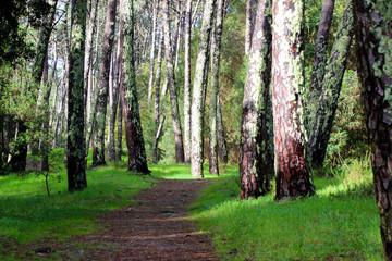 Weg durch einen Wald im norden Spaniens mit grünem Moos an den Bäumen © A. J. Flash