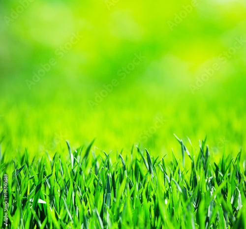 grass texture from a field - 196560489