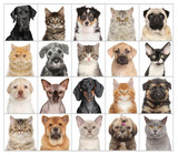 Pet Portraits isolated on white
