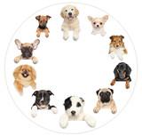 Portraits of dog puppies