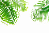 Palm leaves isolated on white background - 196570633