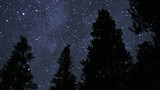 Stars sparkle over silhouetted trees. - 196571887