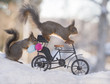 red squirrels on an bike with eggs in snow
