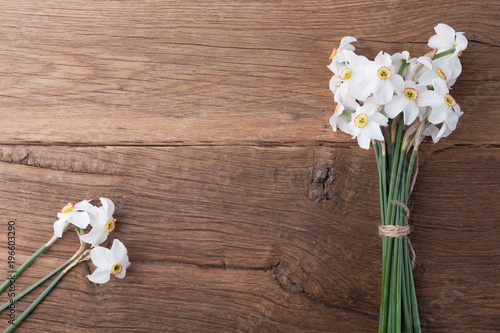 Daffodil flower on background
