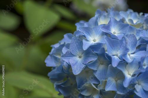 Aluminium Hydrangea Blue Hydrangea