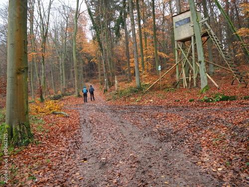 Tuinposter Weg in bos Päärchen wandert durch den goldenen Herbstwald