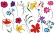 Wildflowers and herbs set. Colorful vector illustration. Floral elements. - 196616873
