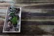 rustic green succulent plants on retro wooden table, copy space