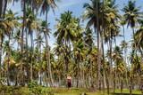 homem olhando para lindos coqueiros - 196647666