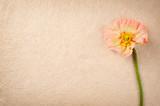 Gartenmohn (papaver orientale) auf handgeschöpften Naturpapier