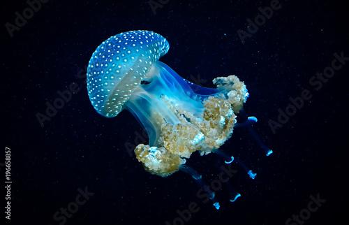 Transparente blaue Qualle im Wasser