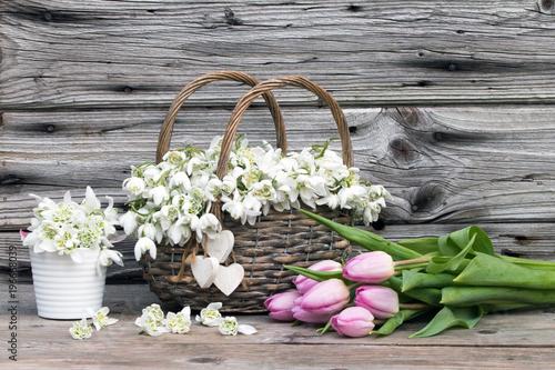 Fototapeta Märzenbecher im Weidenkorb mit rosa Tulpen im Frühling rustikal vor Holzhintergrund