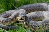 snake - 196681656