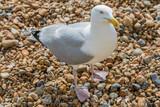 A Seagull - 196682216