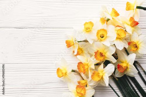 piękne świeże żonkile na białym drewnianym tle widok z góry. Witam wiosna obraz z jasne żółte kwiaty na rustykalnym drewna z miejsca na tekst, płaski świeckich. kwiatowy kartkę z życzeniami