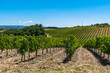 The Landscape in Tuscany is just beautiful with all those Vineyards where good Vines were born and the small Villages.
