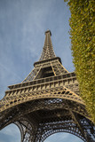 Low angle close up view of the iconic Eiffel Tower, Paris, France viewed past a green tree looking up in a travel and tourism concept - 196692646