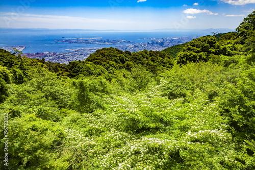 Fotobehang Pistache 初夏の六甲山上、兵庫県神戸市六甲山にて