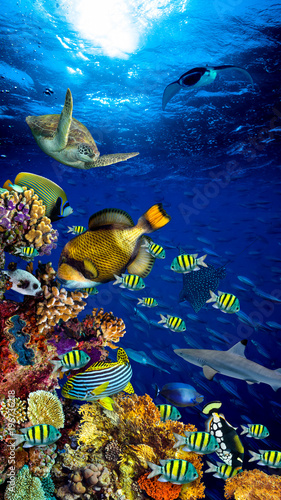 colorful wide underwater coral reef 16to9 vertical background smartphone wallpaper with many fishes turtle and marine life / Unterwasser Korallenriff Hintergrund vertikal hochformat 16zu9
