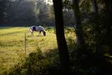 Pferd am Waldrand