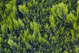 Arbustos valla - 196750219