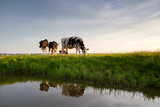 cows graze on pasture by river - 196758656