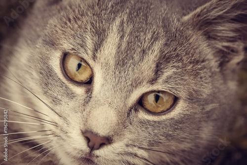 Koci twarz - bliska widok