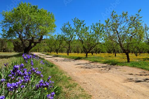 Fotobehang Iris Iris au bord d'un sentier de randonnée