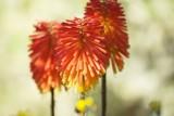 fragment ogrodu z pomarańczowym kwiatem - 196805449