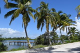 Palm trees lining the shore of island with small dock, blue sky. - 196816682