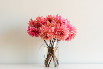 Close up of bright coral pink dahlias in glass jug on white shelf against neutral wall background (selective focus)