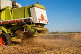 Close up rear view of combine harvester machine while working in the wheat field on a sunny day. - 196834410