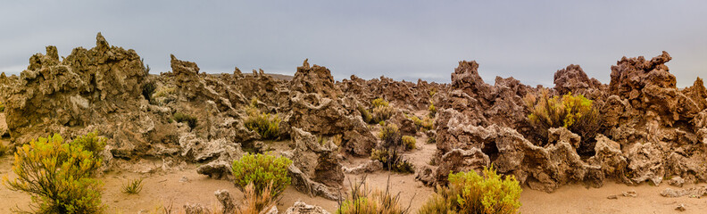 Altiplano, Bolivia petrified corals from times when the Altiplano was under sea level., locally known as Coral Army