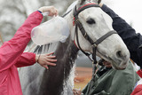 Enfriando al caballo después de la carrera - 196863631