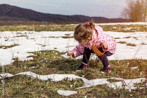 Fototapeta cute girl picking snowdrop flowers in spring .