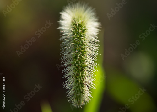 Stem of a grass in a dark background